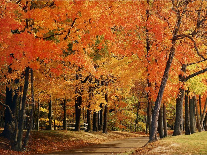 Picture of red, gold and yellow leaves during fall in the park at Rockville, MD