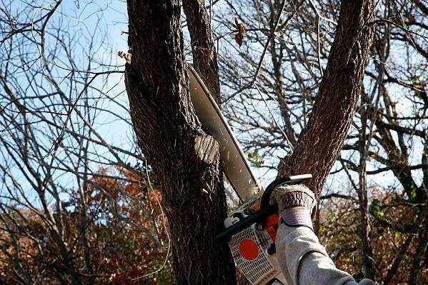Close up picture of tree trimming for a customer in germantown, MD